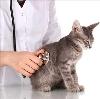 Ветеринарные клиники в Кашине